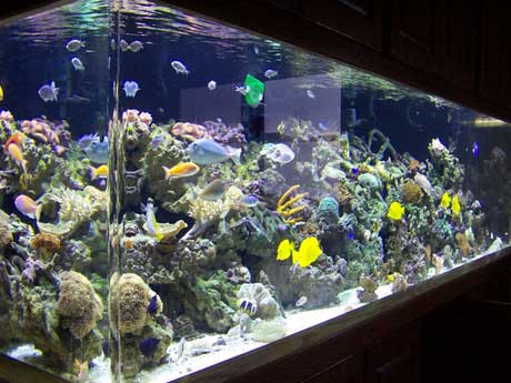 ... aquarium is the coral reef aquarium. Reef 2017 - Fish Tank Maintenance